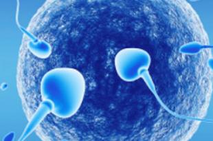 inseminazione artificiale omologa