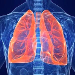 polmoni bronchite