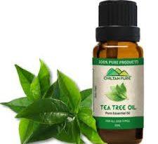 tea tree oil gravidanza