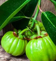 garcinia cambogia ok mentre allattamento
