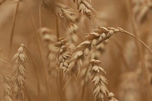 Cereali integrali: vanno bene per lo svezzamento?