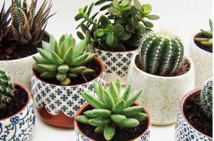 piante stanza dei bambini